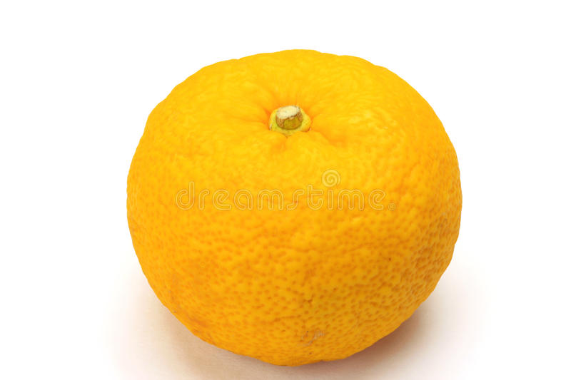 Citron. I photographed citron in a white background stock photography