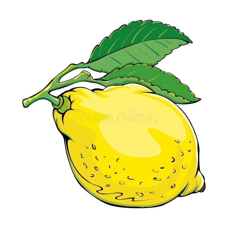 Citron stock illustrationer