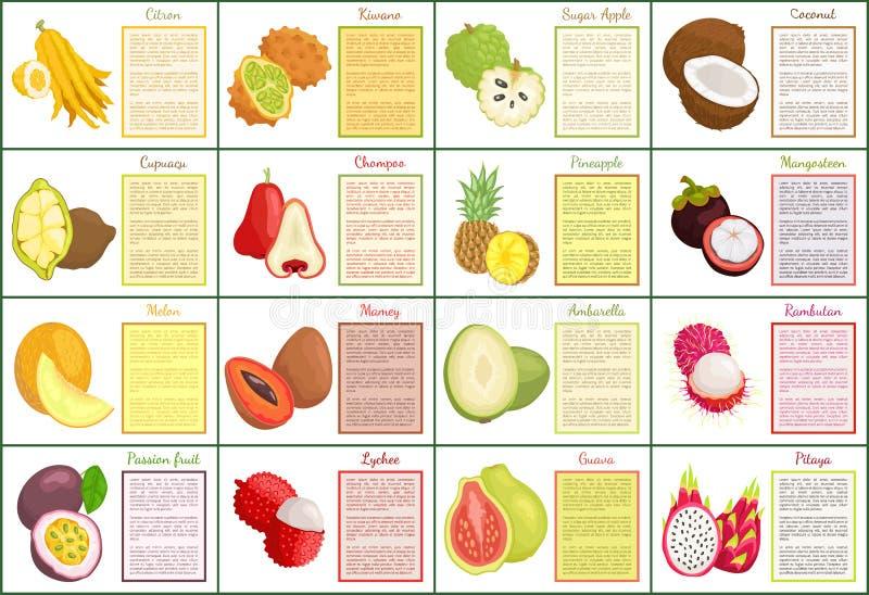 Citron and Bael Papaya Melon Posters Set Vector. Citron and bael posters set text sample and tropical fruits vector. Melon and papaya, mangosteen and mamey royalty free illustration
