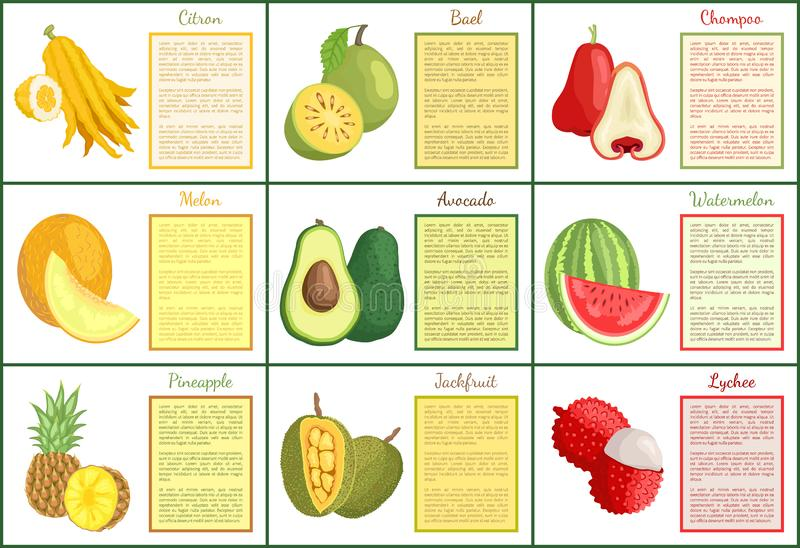 Citron and Chompoo Lychee Durian Posters Vector. Citron and chompoo posters set with text sample vector. Durian lychee and jackfruit, pineapple and avocado vector illustration