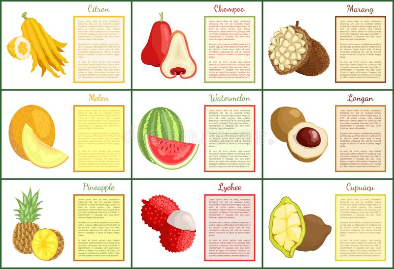 Citron and Chompoo Pineapple Fruit Posters Vector. Citron and chompoo posters set with text sample vector. Tropical fruits watermelon, pineapple and lychee royalty free illustration