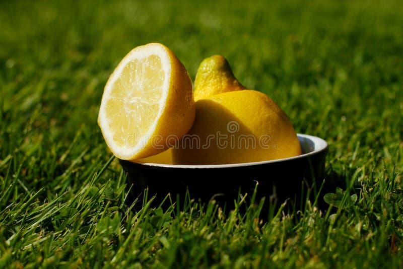 Citron coupé en tranches régénérateur dehors sur l'herbe photo stock
