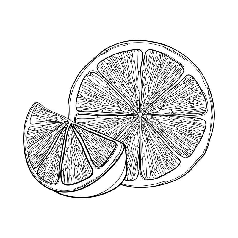 Citron d'ensemble de vecteur ou fruit de tranche et de moitié de chaux dans le noir d'isolement sur le fond blanc Composition ave illustration stock