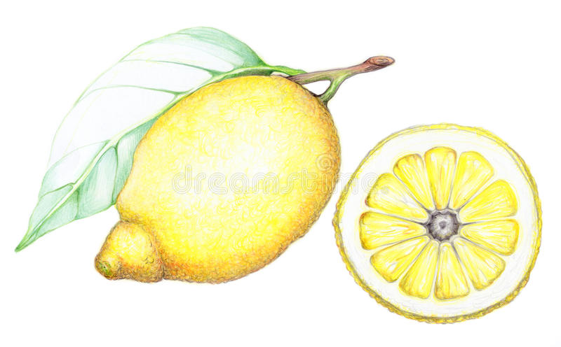 Citron et lame photo stock