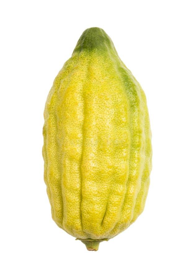 Citron, Etrog. Of Sukkot Holiday stock photography