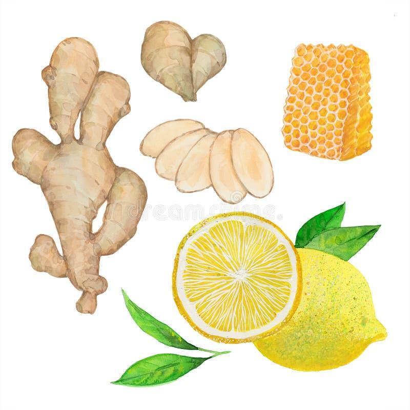 Citron, gingembre et miel illustration de vecteur