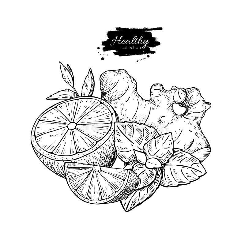 Citron-, ingefära- och mintkaramellvektorteckning Rota, hearbbladet och fruien royaltyfri illustrationer