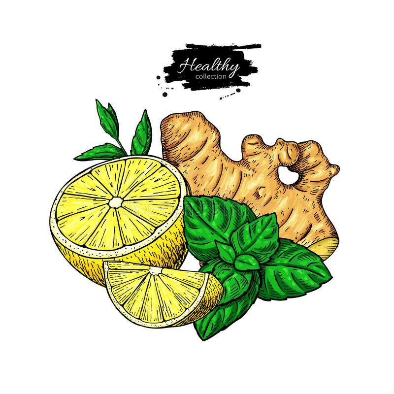 Citron-, ingefära- och mintkaramellvektorteckning Rota hearbbladet, och fruktskivan skissar royaltyfri illustrationer