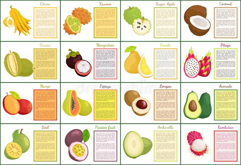 Citron Kiwano and Coconut Set Vector Illustration. Citron kiwano and coconut, sugar apple tropical fruit set of posters with text sample. Avocado and mango vector illustration
