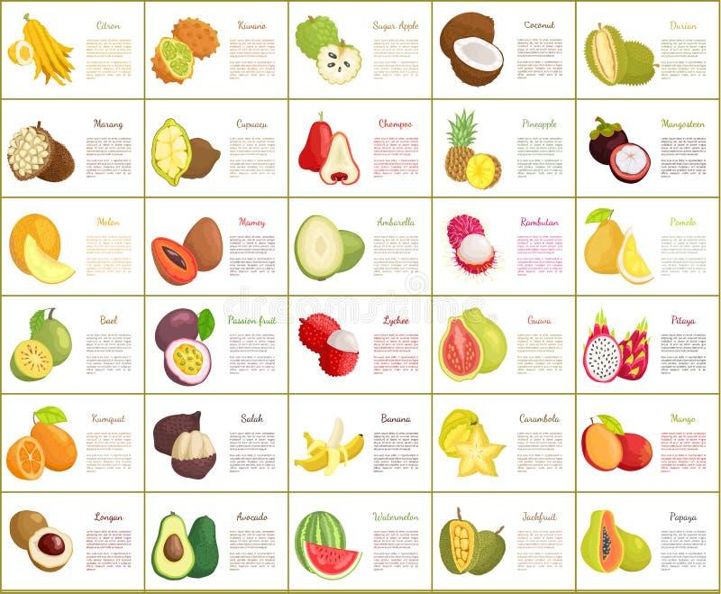Citron and Kiwano Posters Set Vector Illustration. Citron and kiwano posters set vector. Salak and kumquat, papaya and avocado watermelon and bael. Lychee and royalty free illustration
