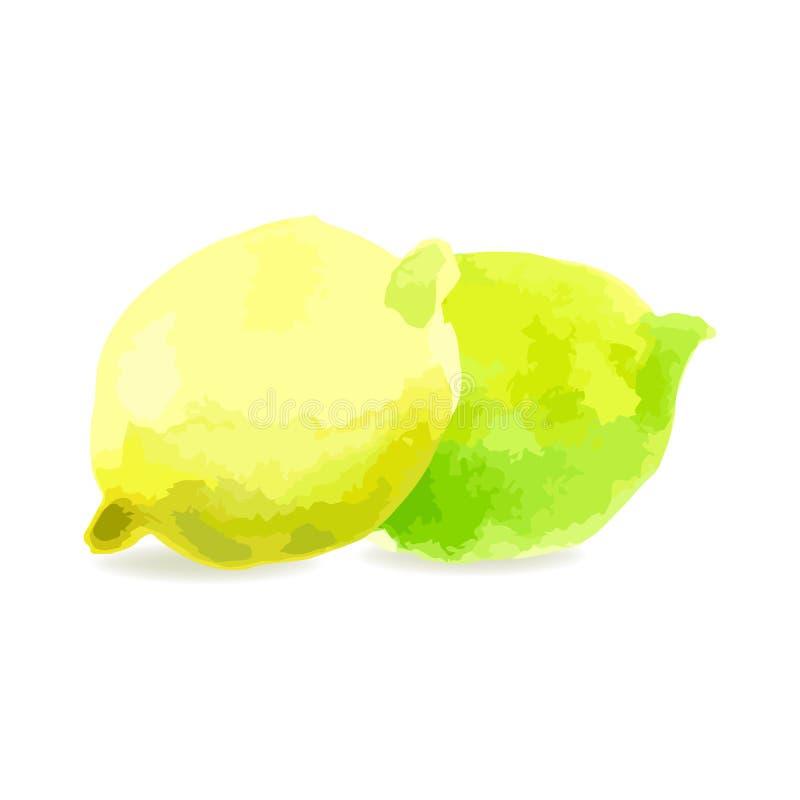 Citron le fruit d'un citron sur un fond blanc Te d'aquarelle illustration de vecteur