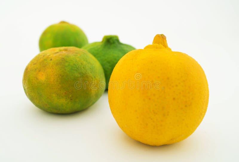 Citron, mandariner och apelsiner 2 royaltyfri bild