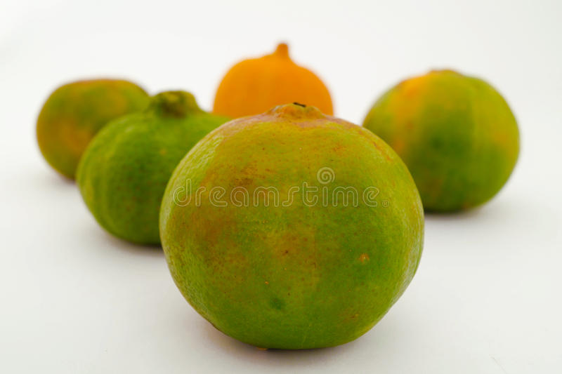 Citron, mandarines et oranges images stock
