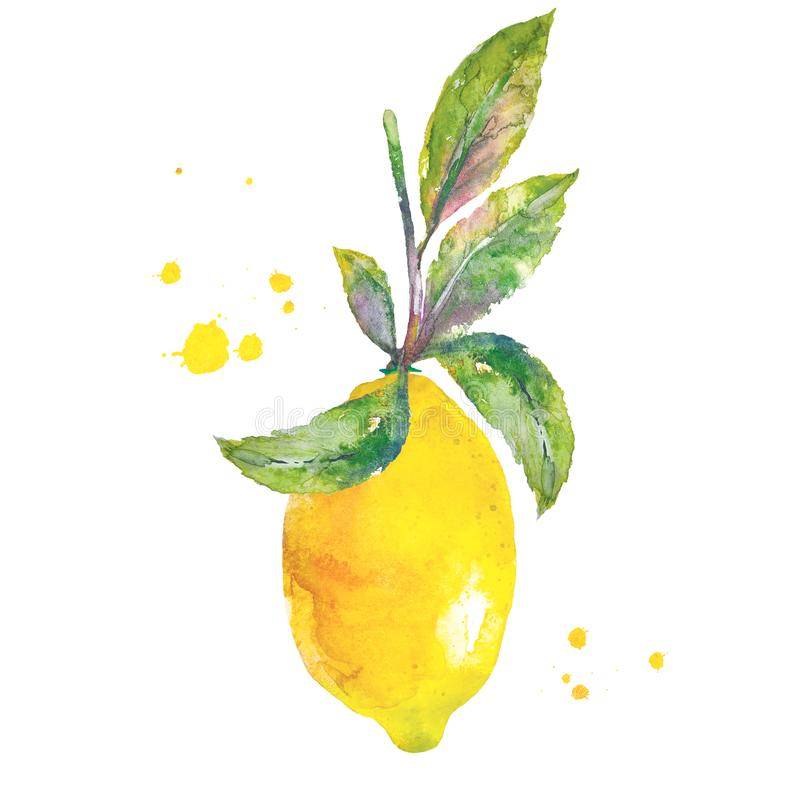 Citron med gröna sidor i vattenfärgstil stock illustrationer