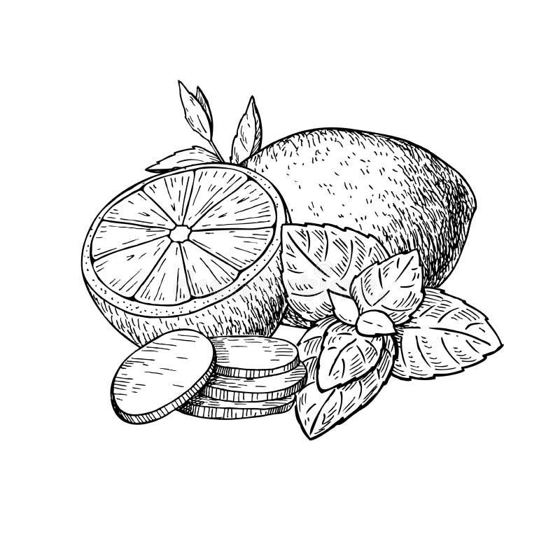 Citron-, mintkaramell- och ingefäravektorteckning Rota, hearbbladet och fruien stock illustrationer