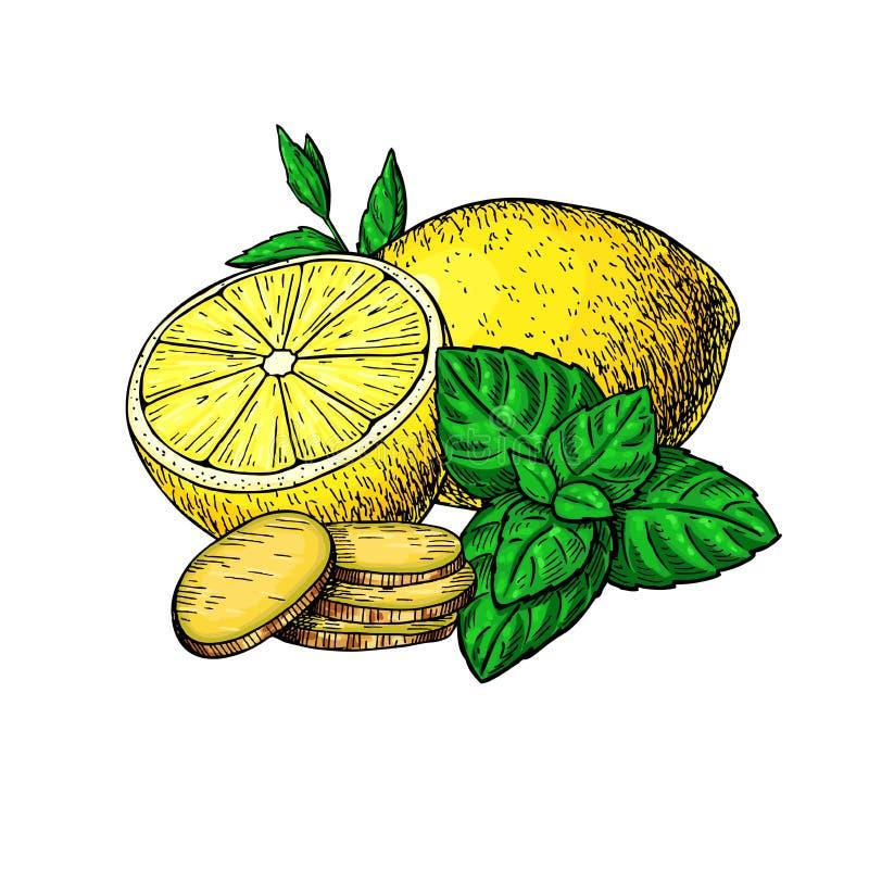 Citron-, mintkaramell- och ingefäravektorteckning Rota hearbbladet, och fruktskivan skissar vektor illustrationer