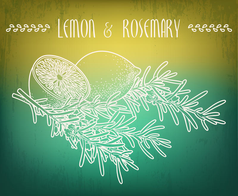 Citron och rosmarinar stock illustrationer