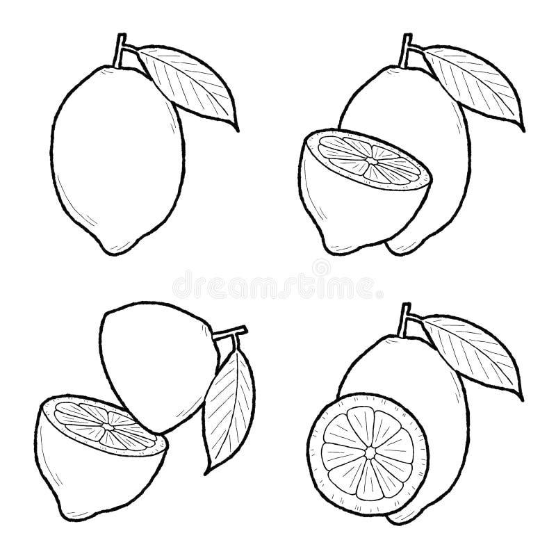 Citron. Vector Illustration Hand Drawn Fruit Cartoon Art royalty free illustration