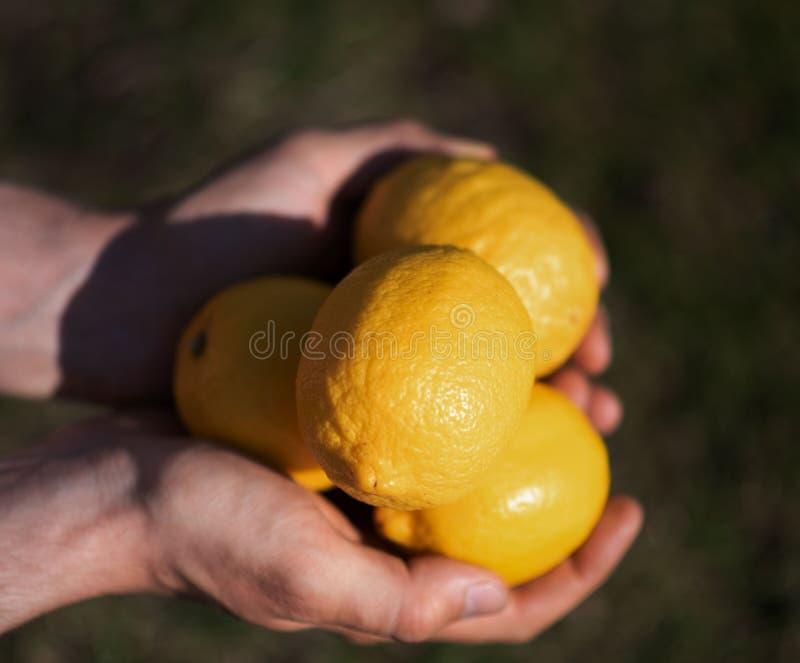 Citroner i händerna utomhus arkivfoto