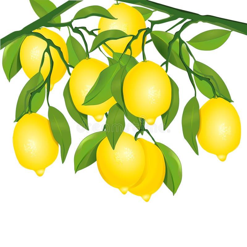 Citroner på tree stock illustrationer