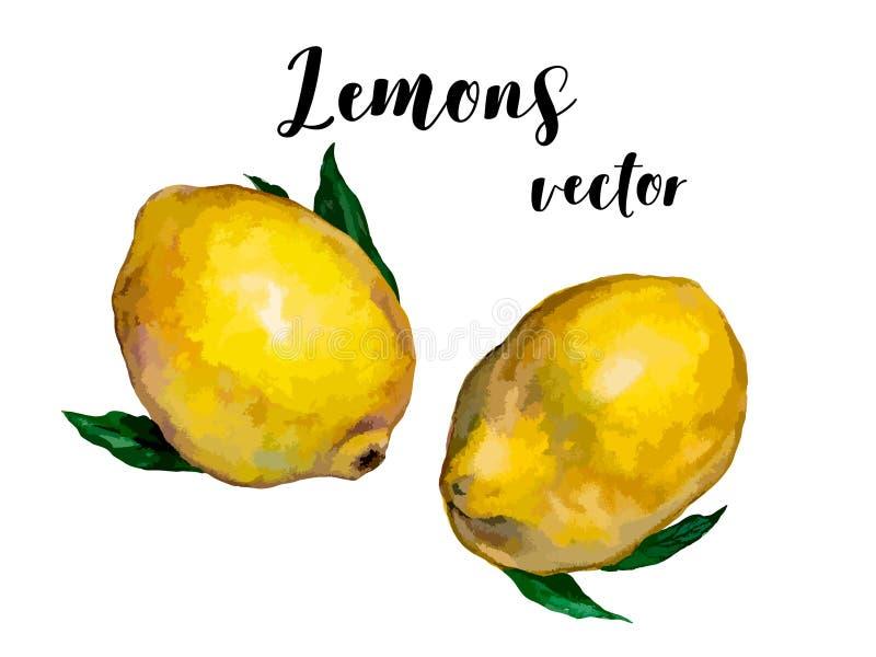 Citronerna ställde in för din design ocks? vektor f?r coreldrawillustration stock illustrationer