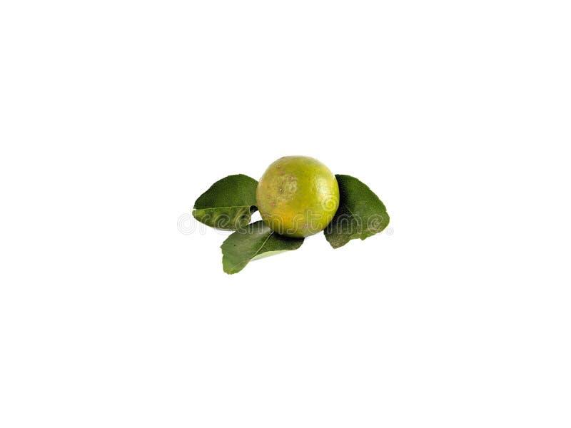Citronfrukt p? vit bakgrund Citrus med grön frukt arkivfoto