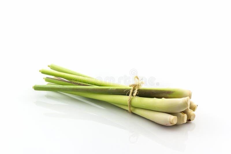 Citrongräs eller oljagräs royaltyfri bild