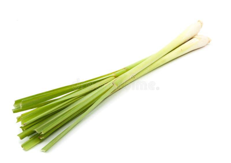 Citrongräs på vit royaltyfria bilder