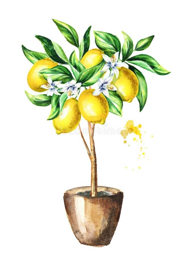 Citronnier avec le fruit et les feuilles Illustration verticale tirée par la main d'aquarelle illustration libre de droits