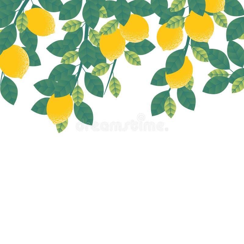 Citrons accrochant sur l'arbre avec des feuilles illustration de vecteur