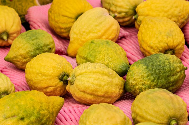 Citrons, the centerpiece fruit of the Four Species of the Sukkot Festival,  for sale in Jerusalem`s Machane Yehuda outdoor market. Jerusalem, ISRAEL / 10 OCT royalty free stock photos