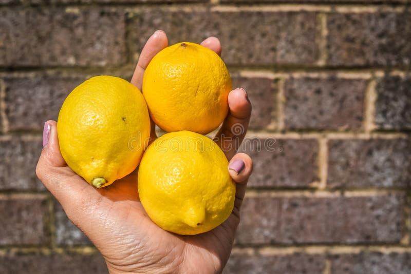 Citrons en main images stock