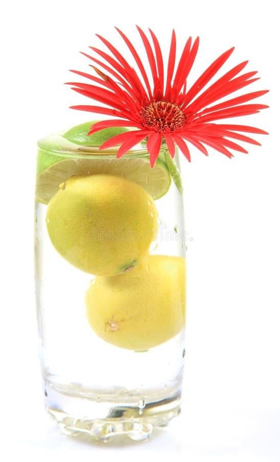 Citrons et fleur frais image libre de droits