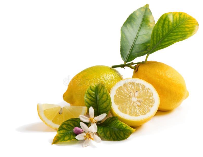 Citrons et fleur organiques photos libres de droits