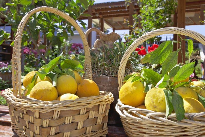 Citrons jaunes images libres de droits