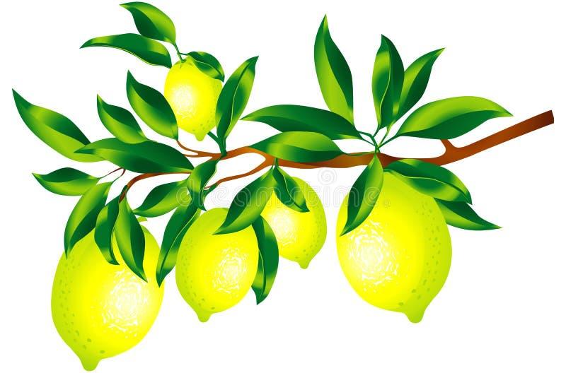 Citronsprig Royaltyfri Bild
