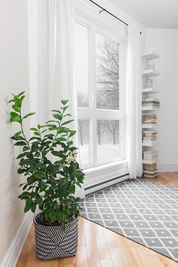 Citronträd i ett rum med fridsam sikt arkivbilder