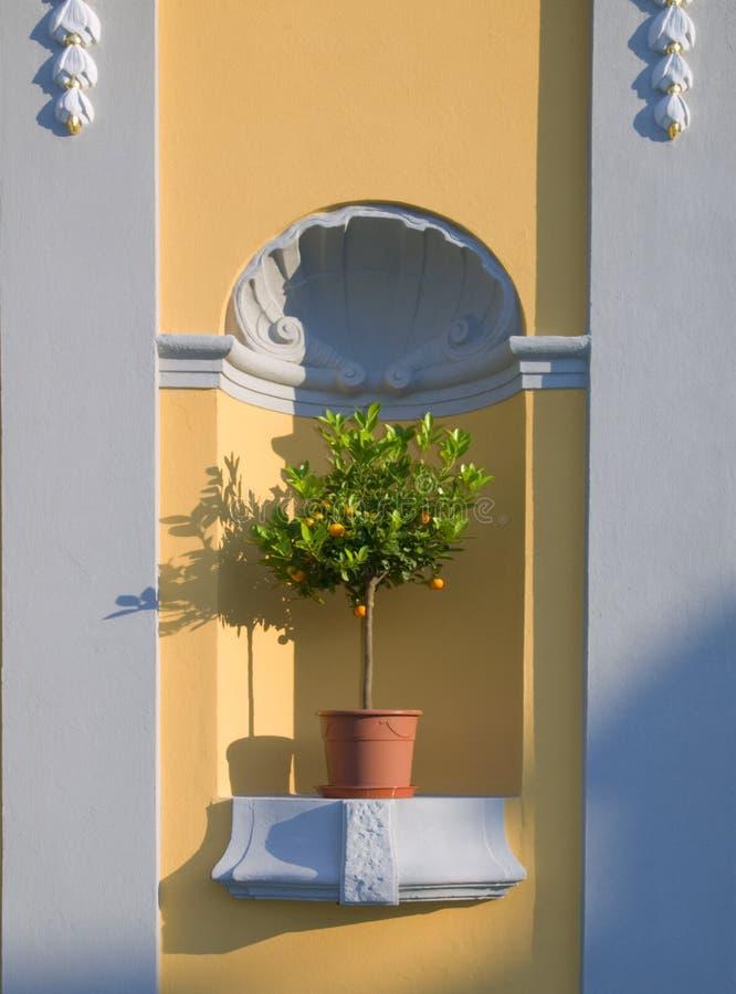 Citrontree royaltyfria bilder