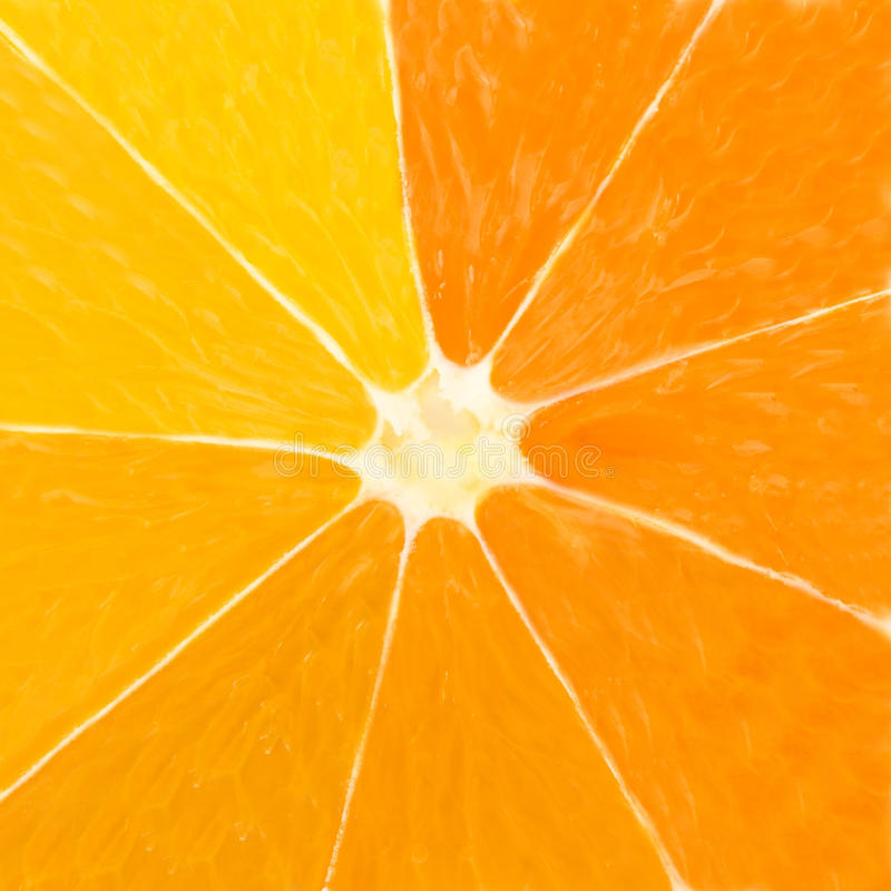 Citrus. Macro photo of citrus slice royalty free stock photos