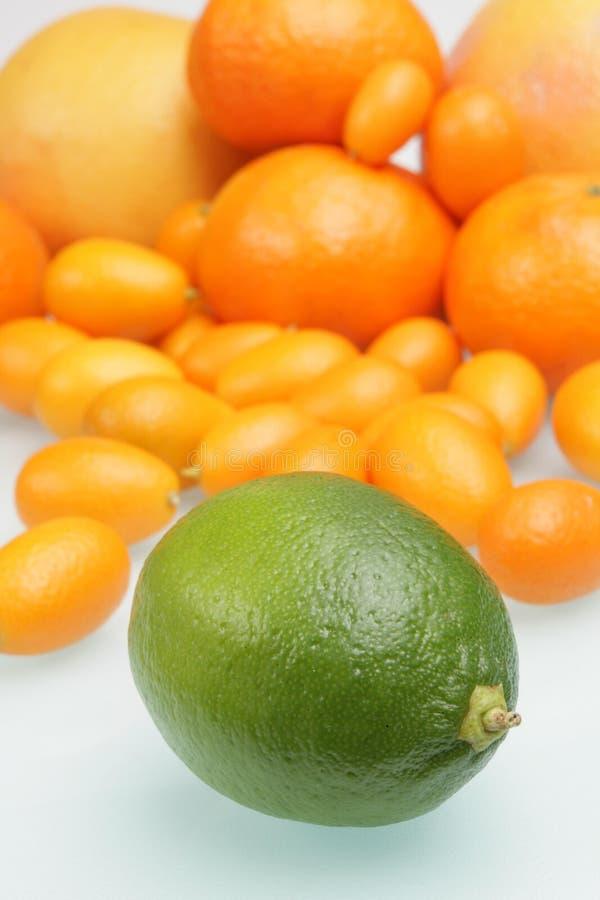 Download Citrus stock image. Image of nature, tropical, green, grapefruit - 4727845