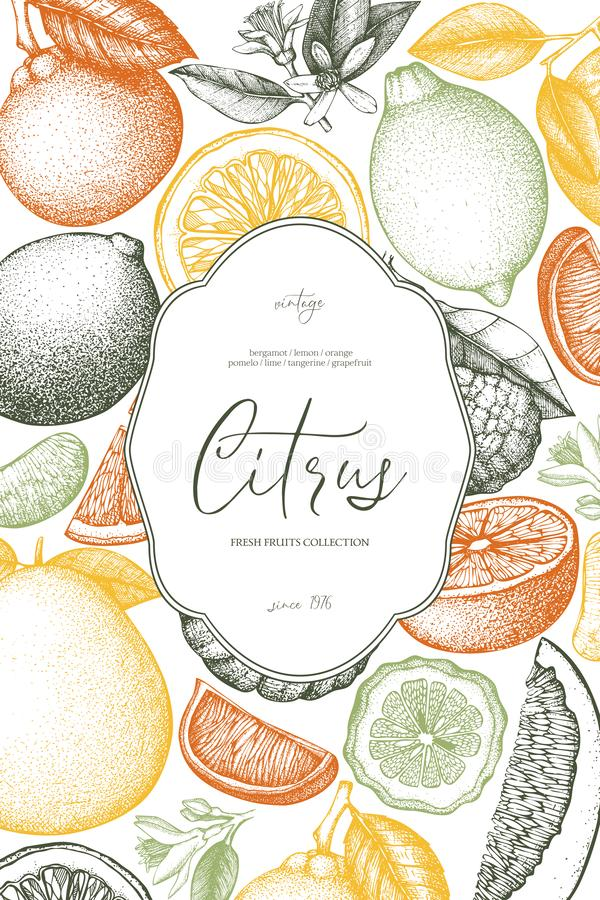 Vintage template. Ink hand drawn design with citrus fruits. Vector illustration on chalkboard. Highly detailed exotic fruit sketch. Engraved style drawing vector illustration
