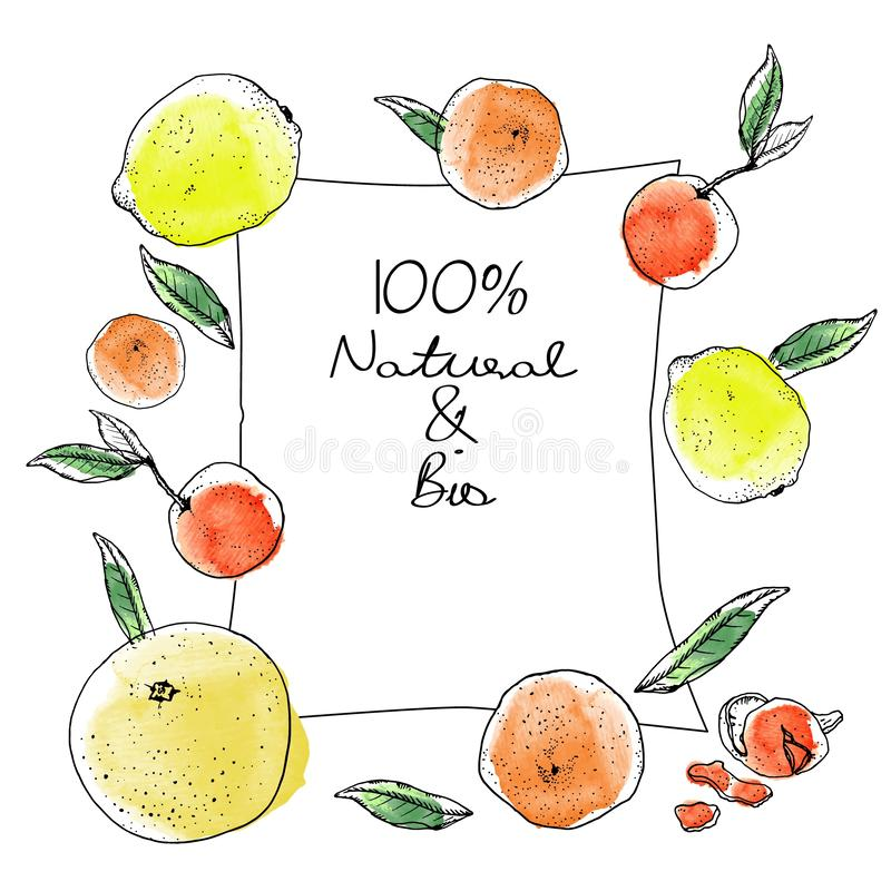 Ink and watercolor sketch citrus fruits rectangular banner on white background. Grapefruits, orange oranges, yellow. Citrus, cheerful, bright, cute banner or tag vector illustration
