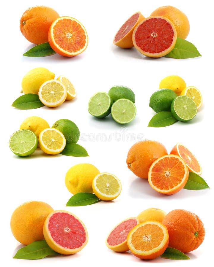 Download Citrus collection stock photo. Image of orange, closeup - 5190992