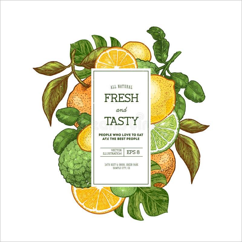 Citrus collection design template. Engraved style illustration. Bergamot, clementine, tangerine, lemon. Vector illustration. Vector illustration. Citrus royalty free illustration