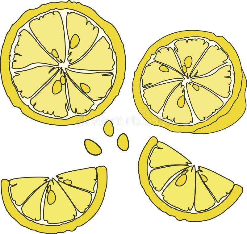 Citrus design för ljus frukt Saftig gul citrus skiva vektor illustrationer
