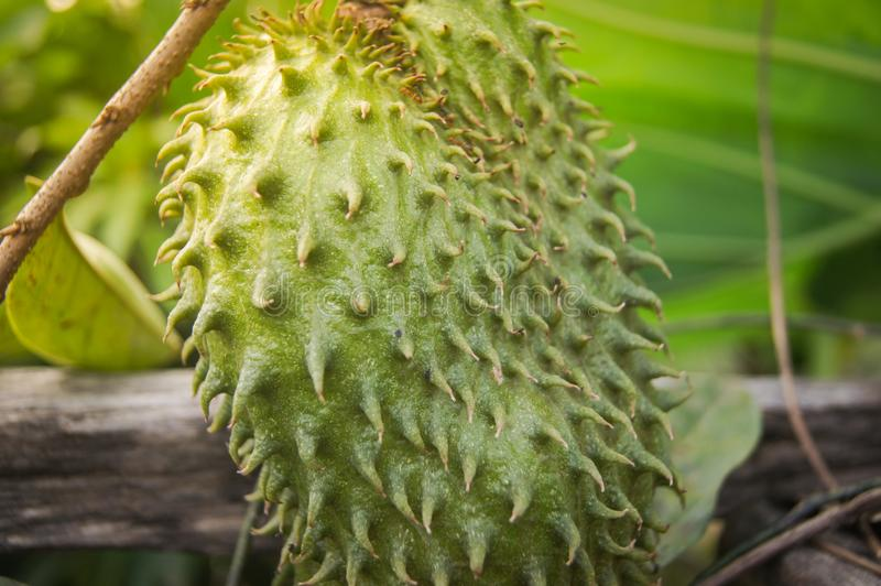 Citrus för äpple för taggig vaniljsås för Soursop arkivfoto