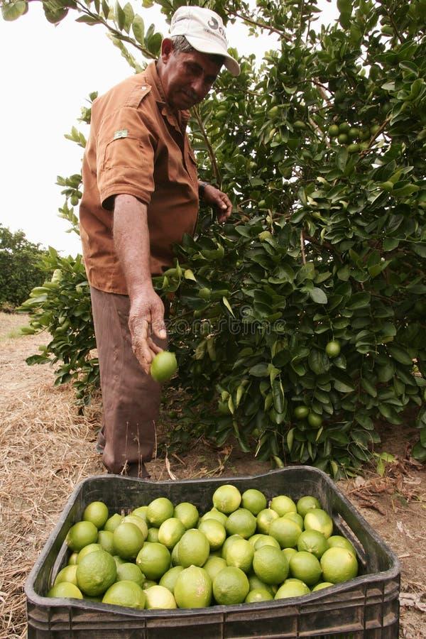 Free Citrus Fruit Stock Images - 178329684
