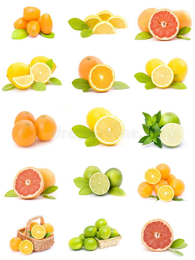 Citrus fruit collection royalty free stock photography