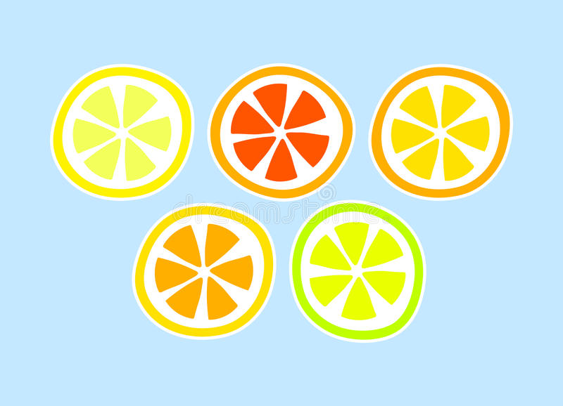 Citrus fruit lemon grapefuit orange slices, vector background vector illustration