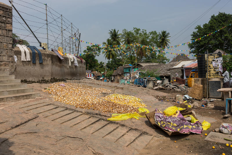 Citrus fruit peels dry on ground in Dindigul. Dindigul, India - October 23, 2013: Yellow and orange Citrus fruit peels are spread on ground to dry in a messy royalty free stock images